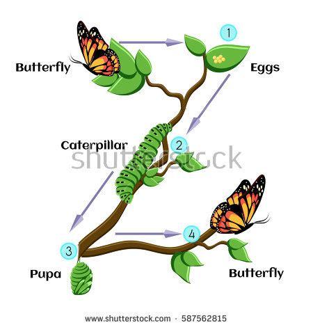 AP Biology - Evolution Unit Practice Exam - Weebly